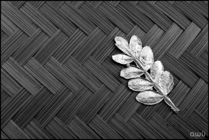 Botanica10_blog